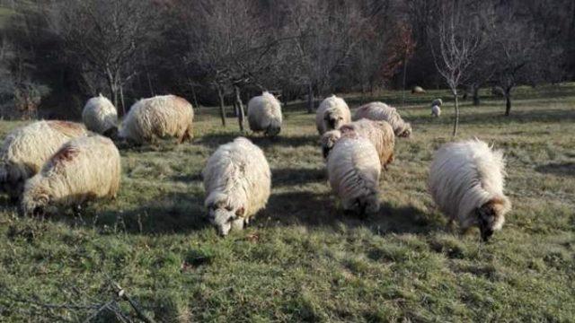 viziune ce este oi)