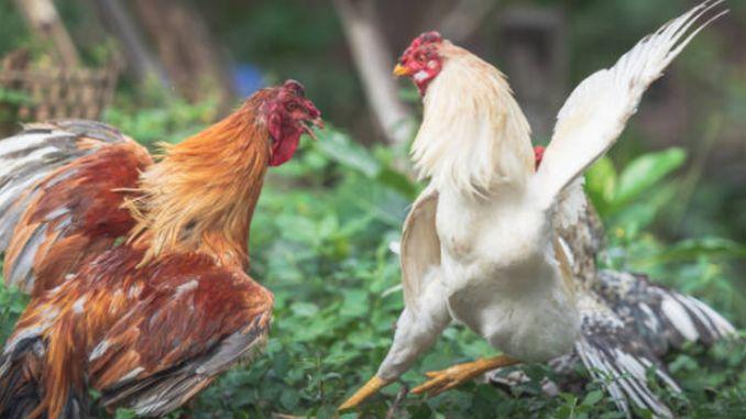 viziunea nouă a pielii de găină